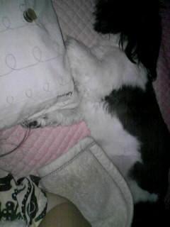 (゜Д゜)寝ルヒィー